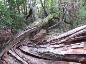 The Stroupie Cabin - Jonas Ridge Fall 2014 017